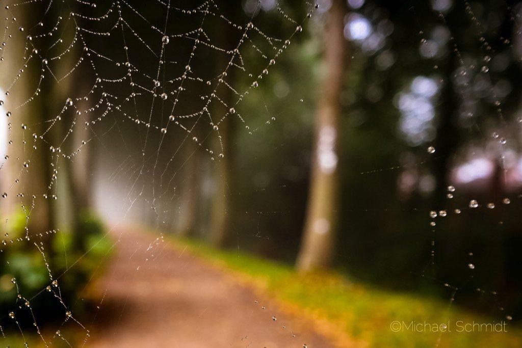 Allee mit Spinnennetz