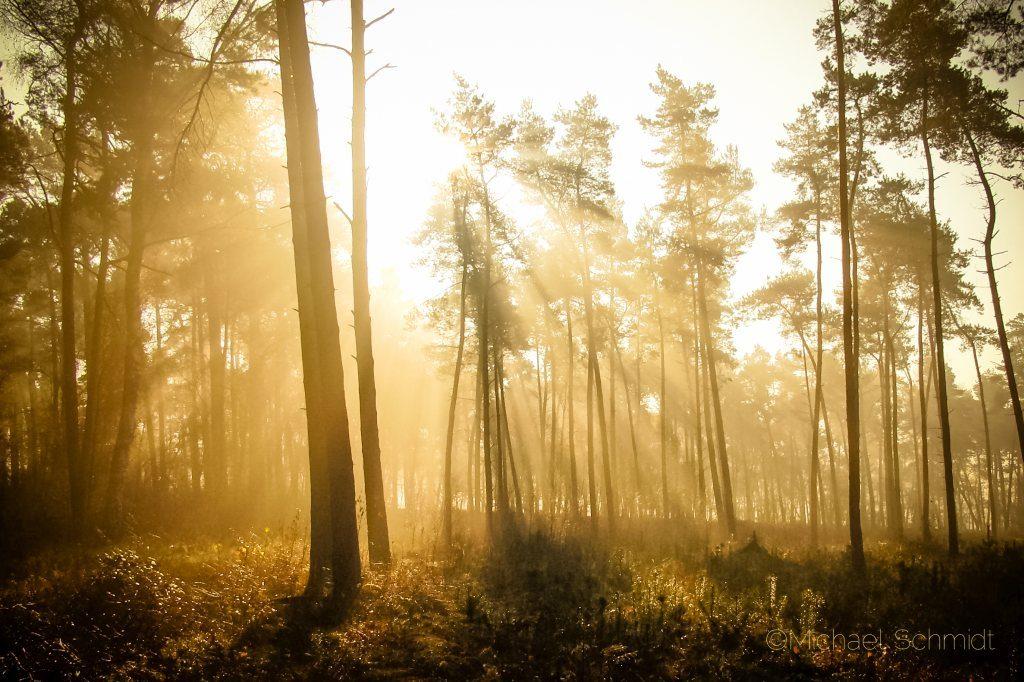Surenburger Wald