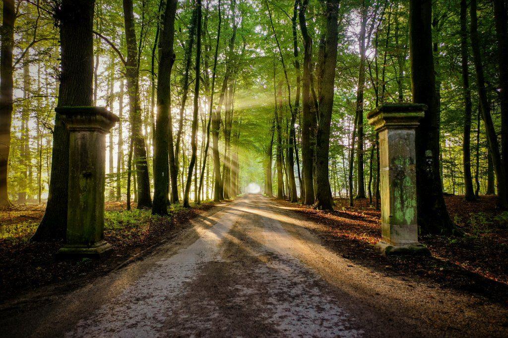 Allee Surenburger Wald Bevergern